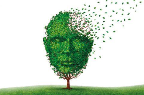 California Plant Provides Hope in Alzheimer's treatment