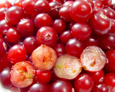 CRANBERRY HELPS IN CANCER TREATMENT